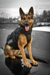 Meet Anouke and Support Meriden Police Department's K-9 Unit